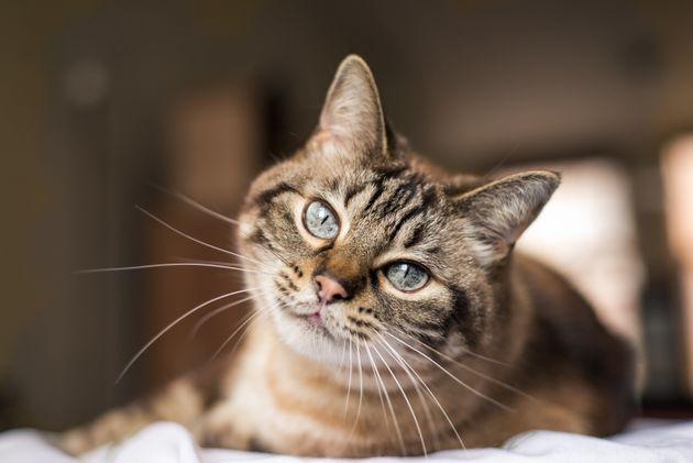 A maioria dos planos de saúde para cachorro e gato não têm abrangência