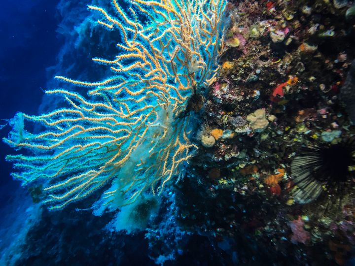 Coral inside the EgadiIslands MarineReserve in Italy.How do you put a cost on the destruction of coral reef