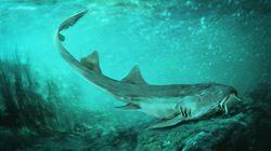 Ανακαλύφθηκε προϊστορικός καρχαρίας με...«εξωγήινα»