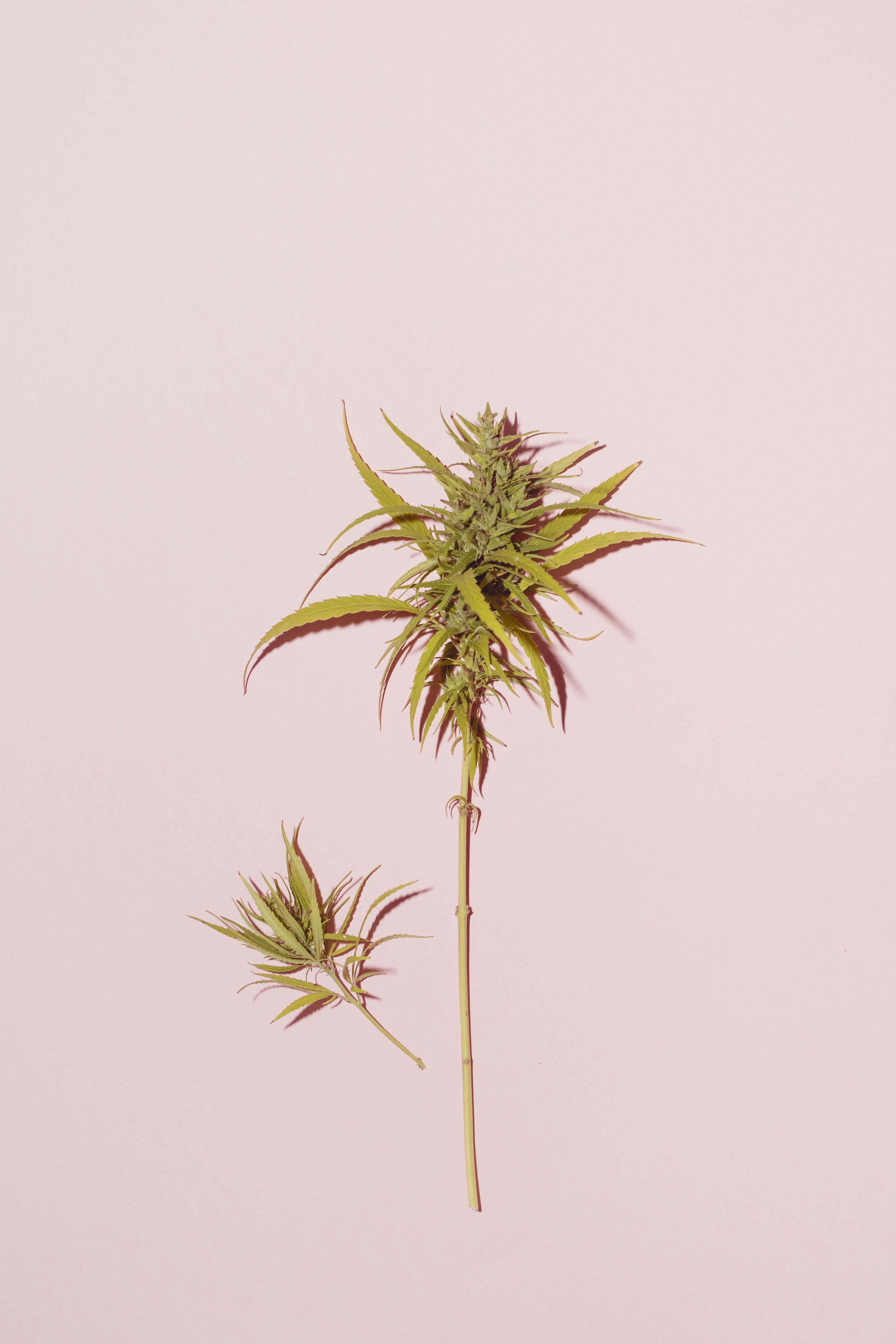 Sephora's Best CBD And Cannabis Beauty