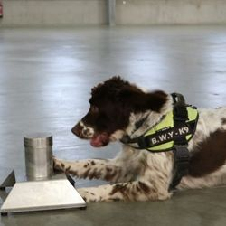 Sniffer Dog Has £25,000 Bounty Put On His Head After Finding £6m Tobacco