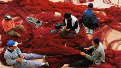 La commission de la pêche du Parlement européen adopte l'accord de pêche entre le Maroc et