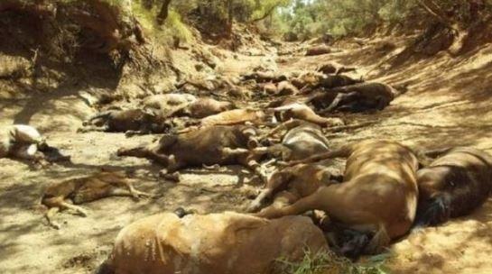 Δεκάδες άλογα νεκρά εξαιτίας του καύσωνα στην