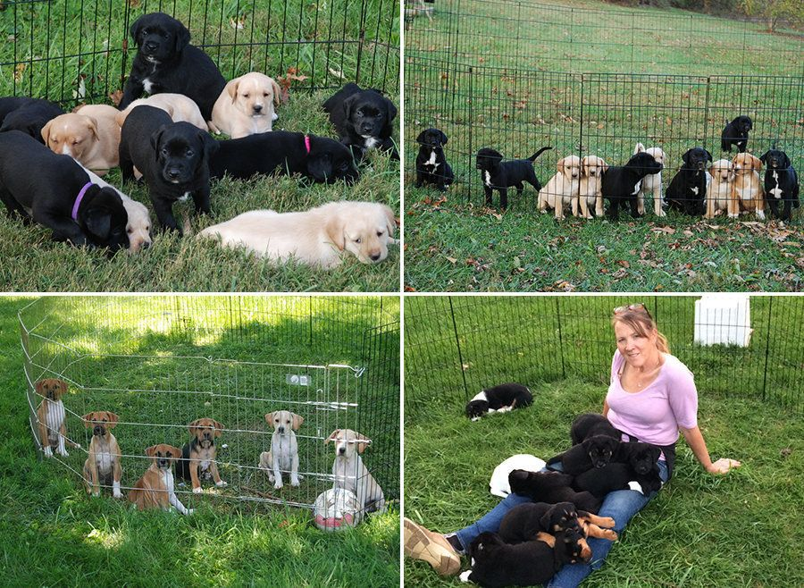 Cara with litters of puppies from adopted