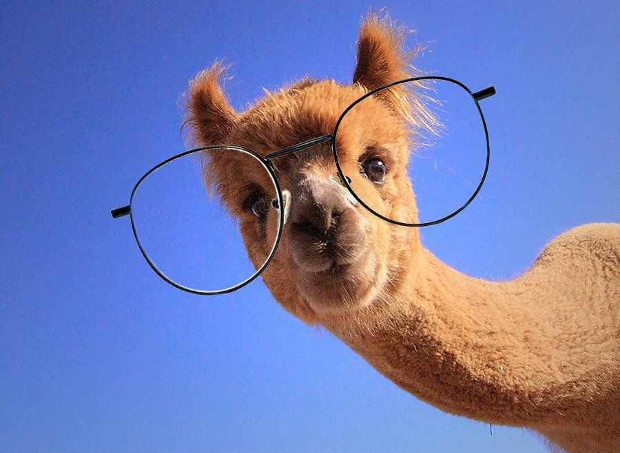 An Alpaca Walked Into An Opticians – Plus 4 Other Animal Tales To End The