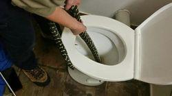 Αυστραλία: Πύθωνας αναδύθηκε από την τουαλέτα και δάγκωσε