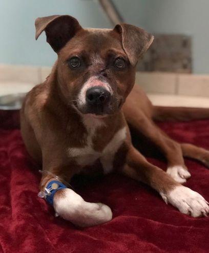 Familie findet Hund mit Pfeil im Kopf – dann geschieht ein