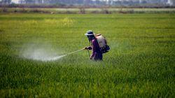 Com mais registros de agrotóxicos, Brasil opta por 'uso desenfreado de