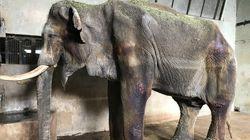 29살로 세상 떠난 전주동물원 코돌이의
