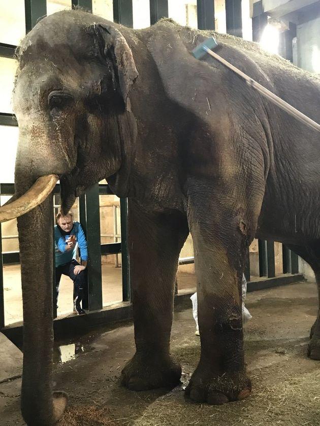 2015년 방문한 홍콩 오션파크의 코끼리 전담 수의사 파올라 마르텔리가 코돌이의 상태를 진단하고