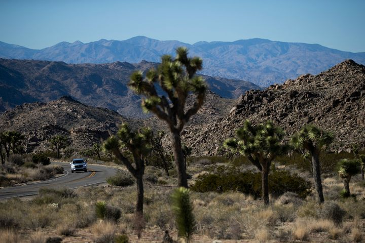 Joshua Tree National Park remained open during the government shutdown, and with few rangers on hand, some visitors drove the