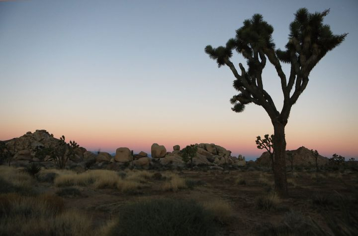 Just eight rangers were on hand to oversee Joshua Tree's sprawling 790,636 acres during the shutdown.