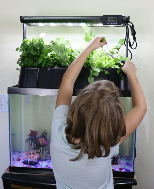 A child tends to an Ecolife tank in a school