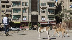 Dans les rues du Caire, le défi des chiens