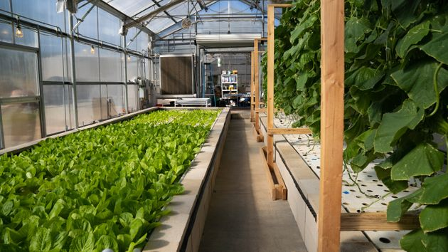 The leafy greens shown here, atthe Ecolife Innovation Center in northern San Diego County, are...