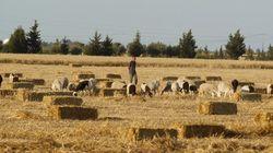 La Tunisie n'a pas de politique agricole déplore le président de