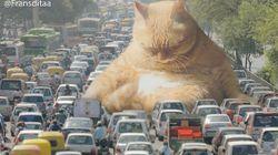 포토샵으로 고양이의 지구 정복을 꿈꾼