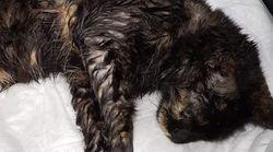 Λέσβος: Πυροβόλησε γάτα επειδή του έτρωγε τα