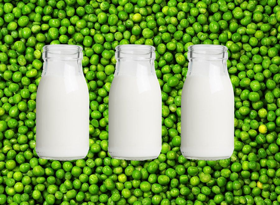Pea Milk Is Apparently The Next Big Food Trend, But Should It
