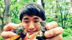 Ιαπωνία: Ερωτεύτηκε κατσαρίδα και δηλώνει ότι είναι πιο σέξι από κάθε γυναίκα - Μέχρι που την