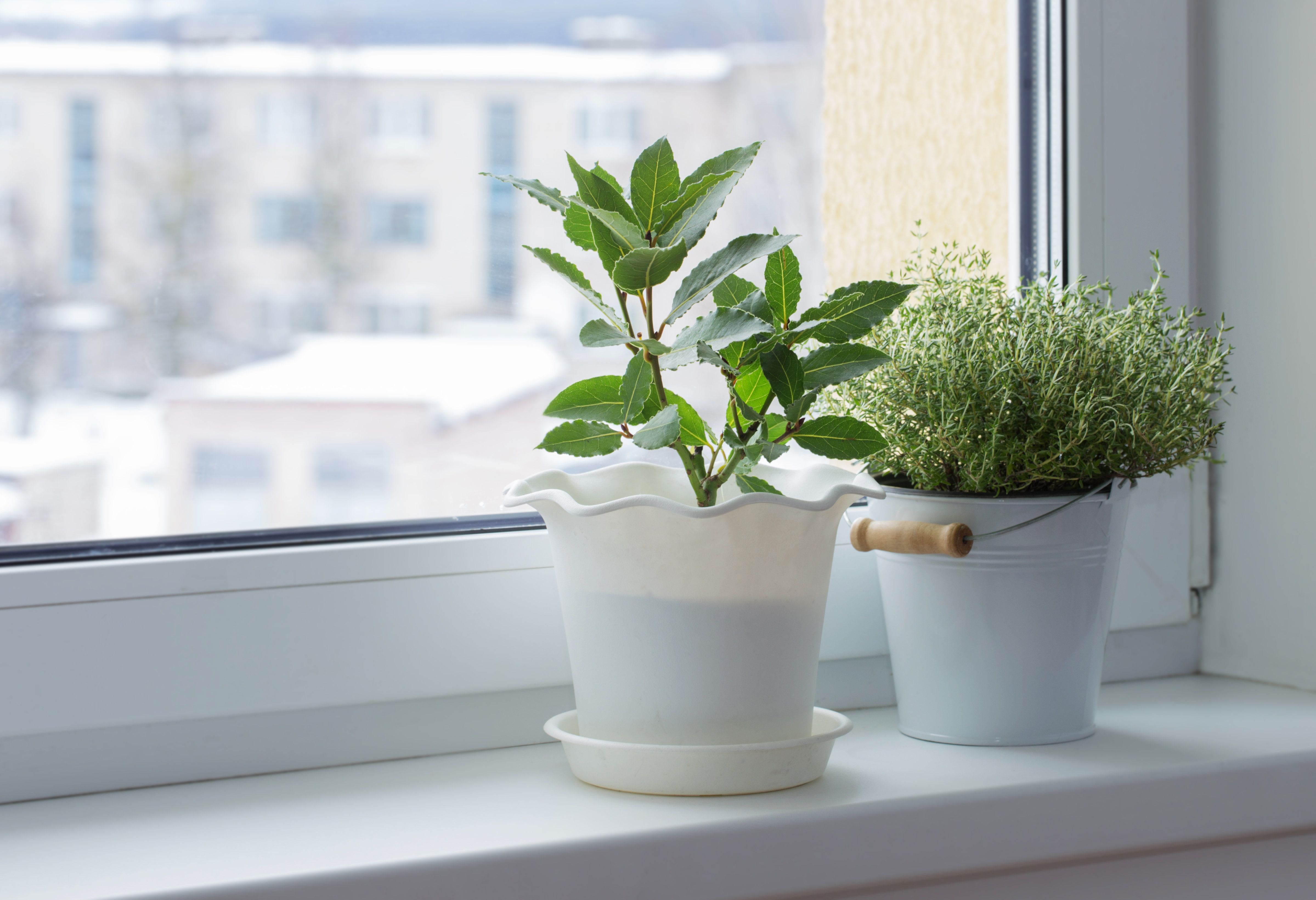 How Not To Kill Your Houseplants In The Cold