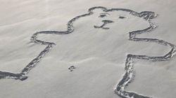 Mais comment le nombril de cet ours a-t-il pu être dessiné dans la neige