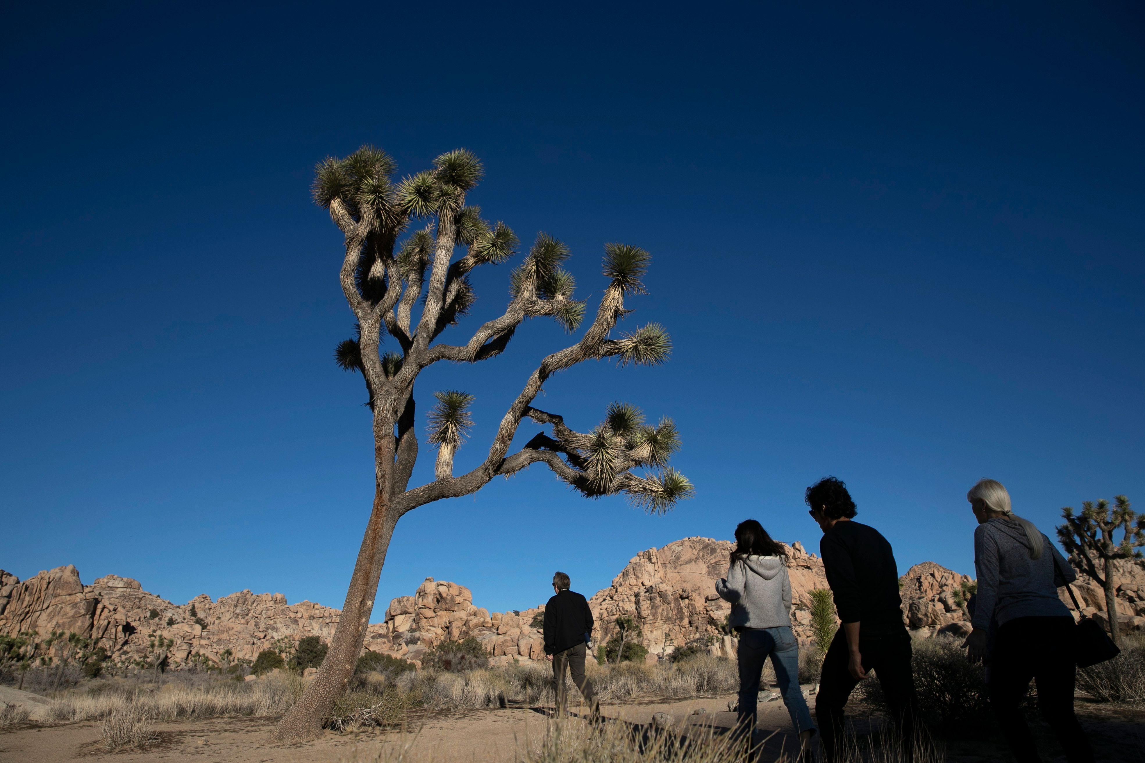 Joshua Tree National Park suffered extensive damage during the partial government shutdown.