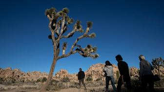 People visit Joshua Tree National Park in Southern California's Mojave Desert, Thursday, Jan. 10, 2019. The national park won't be closing because of the partial government shutdown after all. The National Park Service said it's freed enough money from recreation fees to prevent the closure of outdoor areas, although most visitor centers won't operate. (AP Photo/Jae C. Hong)