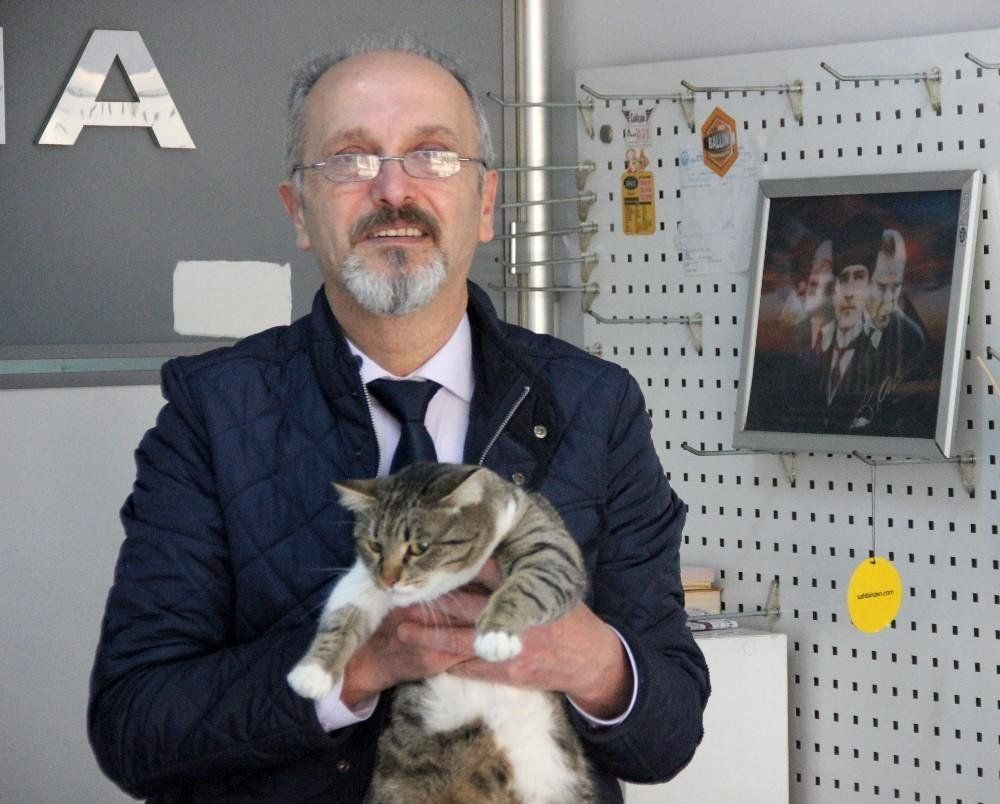 Καταδικάστηκε σε φυλάκιση επειδή ο γάτος του μαγαζιού του γρατζούνισε μια