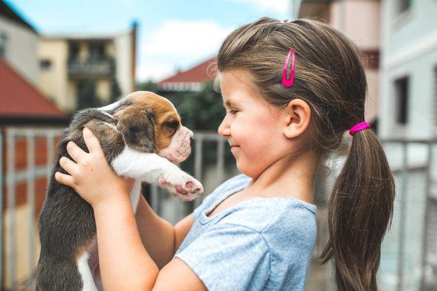 Beagles adoram brincar com os