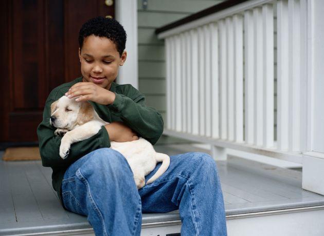 Labrador é sociável, inteligente e bem