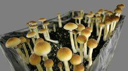 Denver To Vote On Decriminalizing Psychedelic Mushrooms In