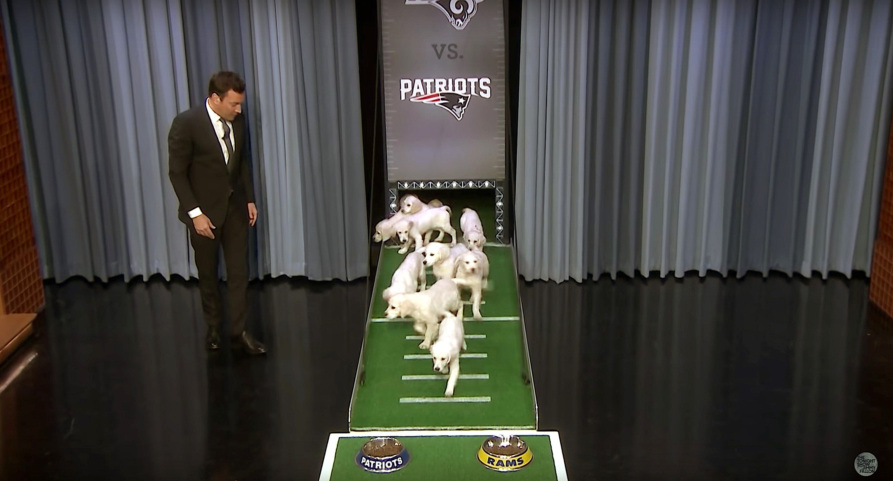 "Jimmy Fallon uses puppies to predict the outcome of the Super Bowl on ""The Tonight Show."""