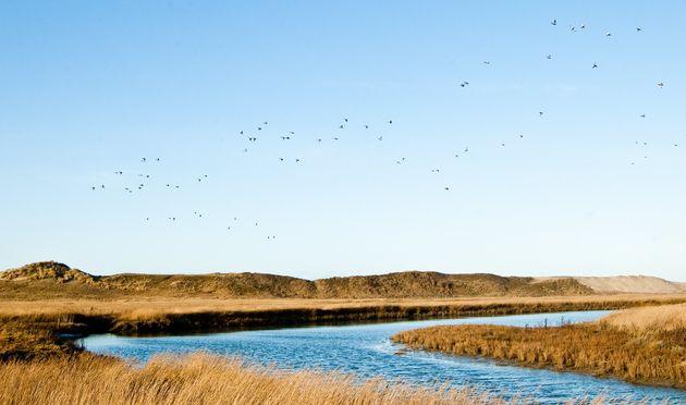 Ghardaïa: Plus de 8.130 oiseaux migrateurs observés dans la zone humide de Sebkhat El-