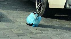 Και ξαφνικά οι γάτες και οι σκύλοι στην Αγγλία έγιναν μπλε σαν