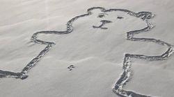 On sait comment le nombril de cet ours dessiné dans la neige a été