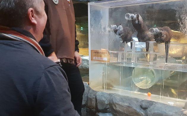 경기 한 실내체험동물원에서 수달이 먹이를 달라며 통밖으로 손을 내미는 모습을 영국 본프리재단(Born Free Foundation)의 크리스 드레이퍼(Chris Draper) 대표가 보고 있다.