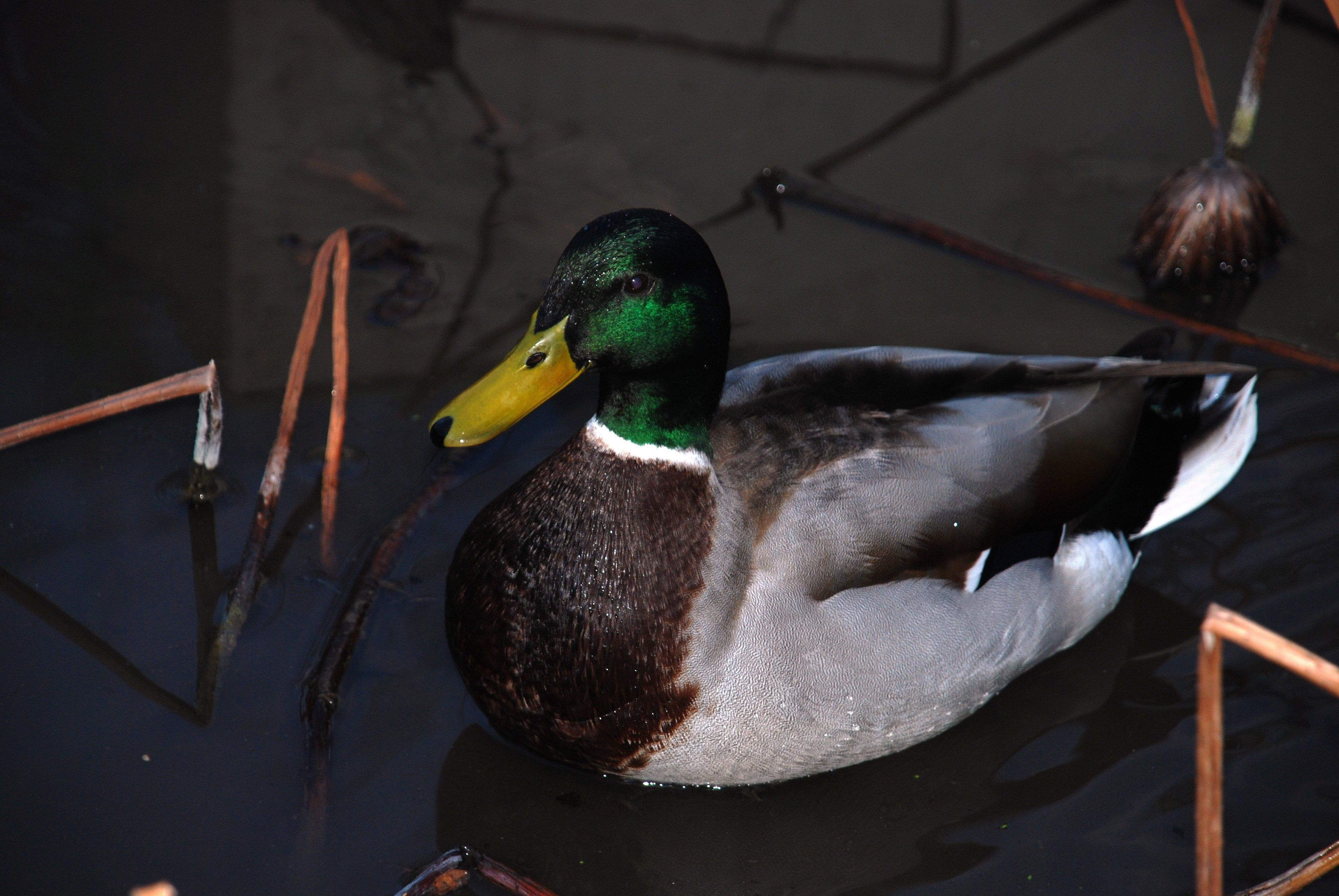 Zones humides: découverte de nouvelles espèces d'oiseaux migrateurs à
