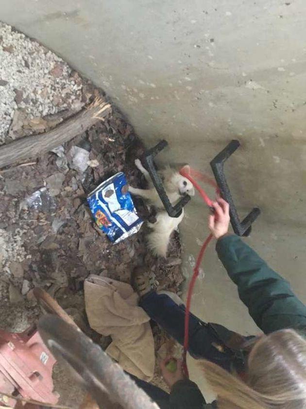 숲을 걷던 남자는 맨홀에서 이상한 소리를