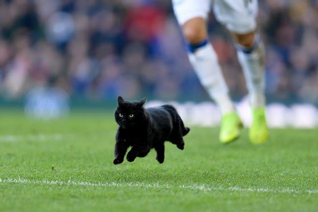 프리미어 리그 에버튼과 울버햄튼의 경기에 검은 고양이가