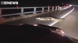 Pendant les inondations en Australie, les crocodiles s'invitent dans les