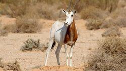 Le Parc national de Dghoumès, un exemple dans la consécration de la