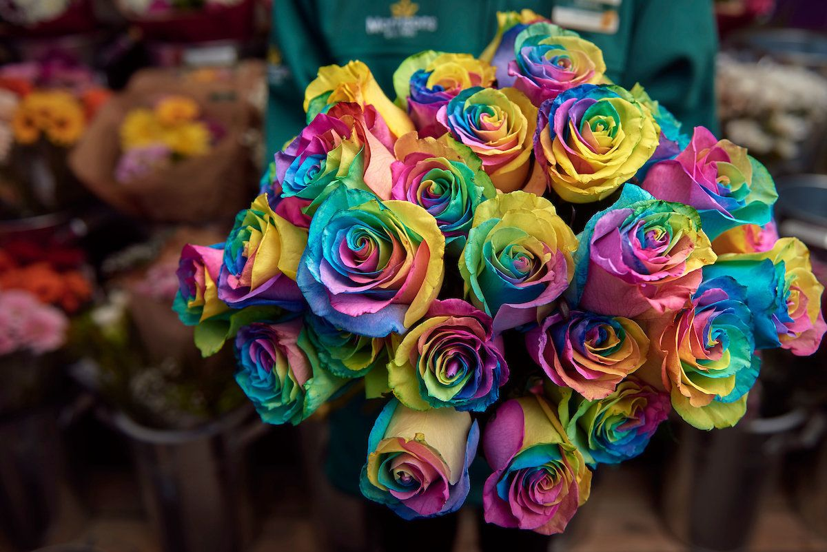 You Can Buy Rainbow Roses To Help Young LGBT+ Homeless People This Valentine's
