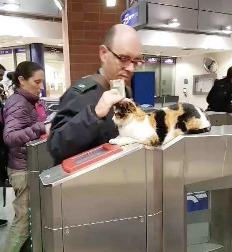 이스라엘의 어느 지하철 역 개찰구에는 매일 사람을 맞이하는 길고양이가