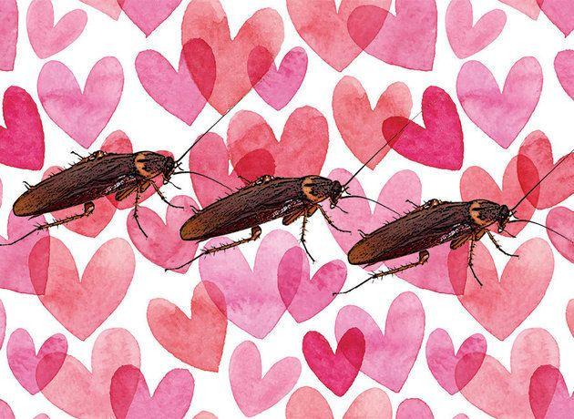 Για την Ημέρα του Αγίου Βαλεντίνου μπορείτε να δώσετε σε μια κατσαρίδα το όνομα του πρώην συντρόφου