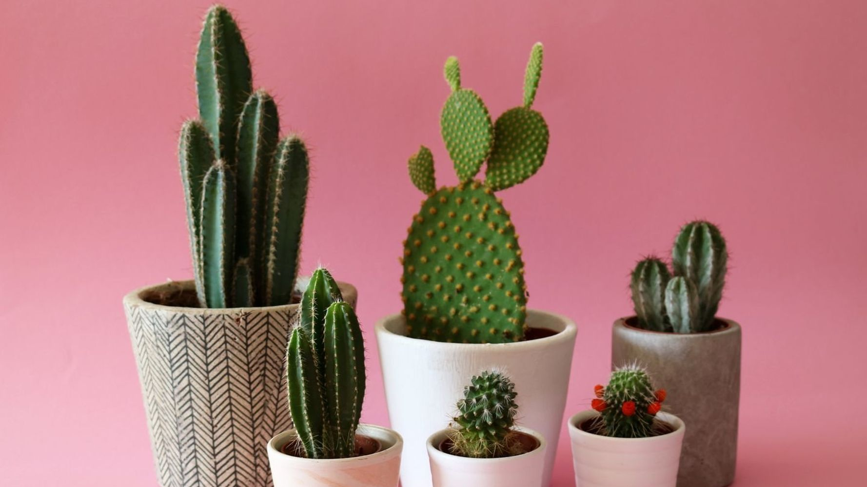 How Not To Kill Your Houseplants: An Expert Guide For Green-Fingered Enthusiasts