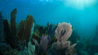 Looe Key is a coral reef located within the Florida Keys National Marine Sanctuary. It lies to the south of Big Pine Key. This reef is within a Sanctuary Preservation Area (SPA).