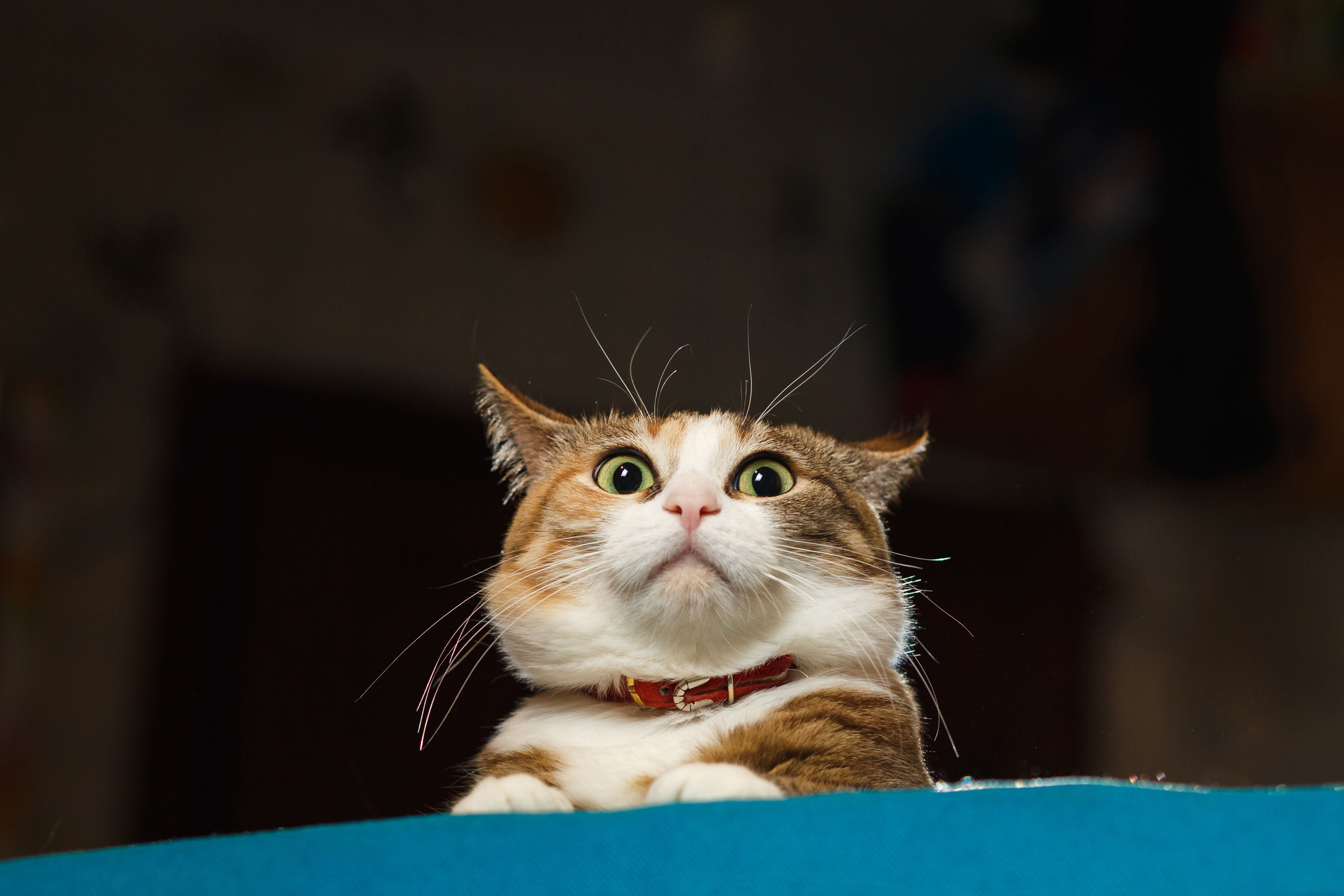 Cats Are The Weirdest, As Proven In Five