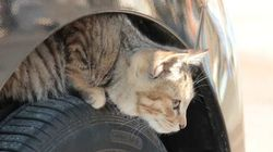 #猫バンバン って何?