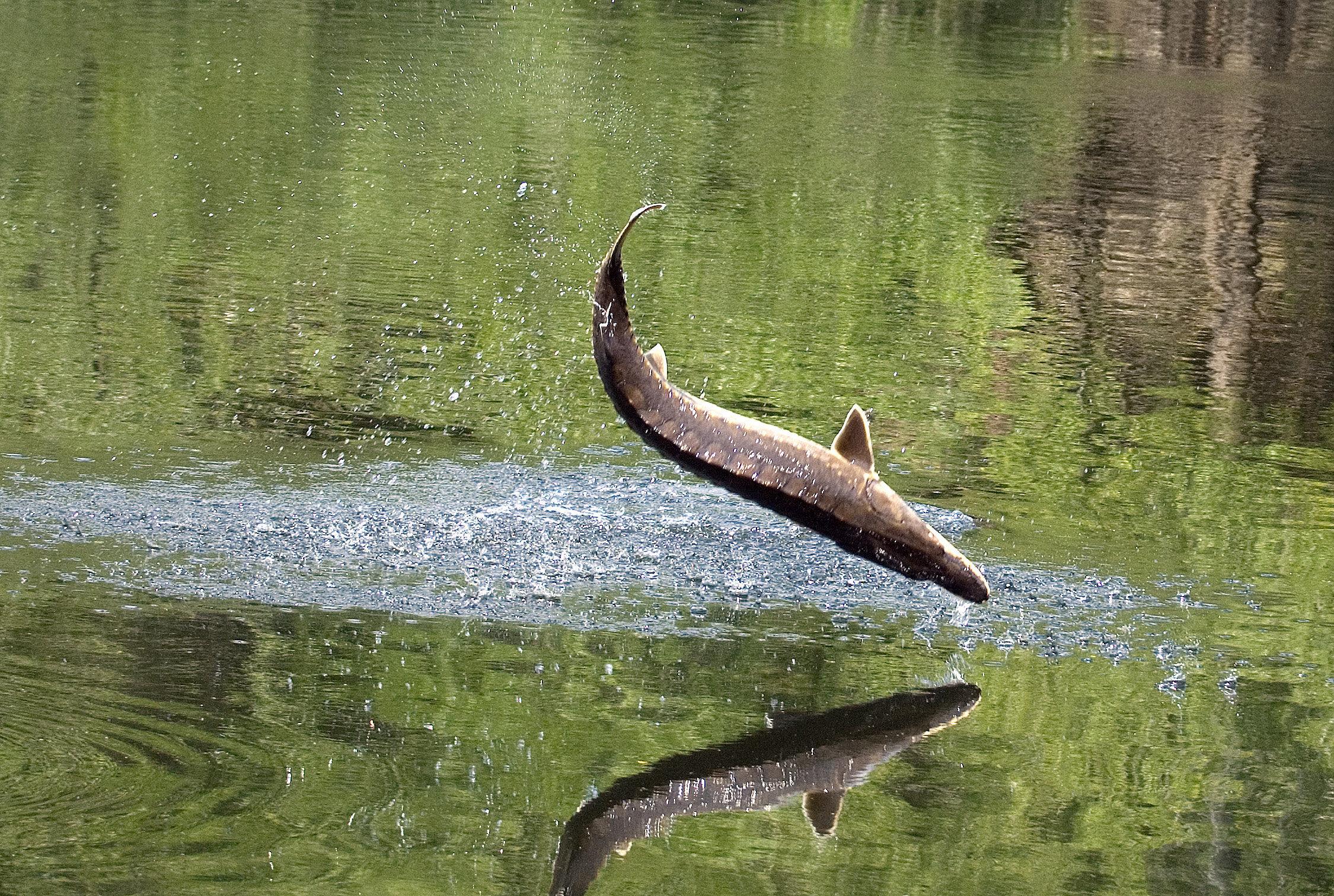 Άραγε, αναγνωρίζει ένα ψάρι τον εαυτό του στον